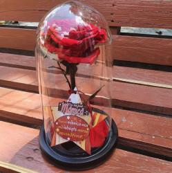 Trandafir criogenat cu mesaj