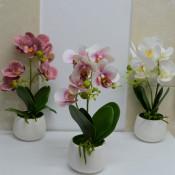 Orhidee cu aspect natural in ghiveci ceramic rotund alb, 35 cm