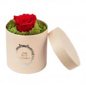 Trandafir criogenat, decorat in cutie cu licheni naturali stabilizati