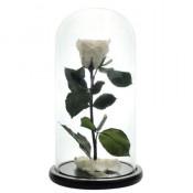 Trandafir criogenat in cupola de sticla 25 cm, pe pat de petale