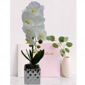 Orhidee cu aspect natural in ghiveci ceramic argintiu, 50 cm