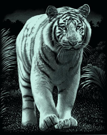 "Desen prin razuire ""Tigrul"" 20x25,5 cm"