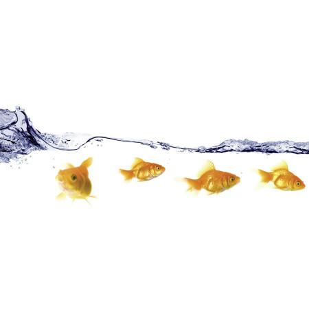 Stickere adezive pentru cabina de dus, pești