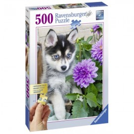 PUZZLE CATEL HUSKY, 500 PIESE