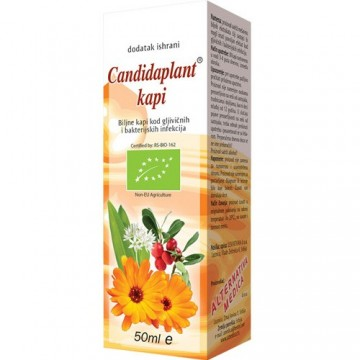 Slika CANDIDA PLANT