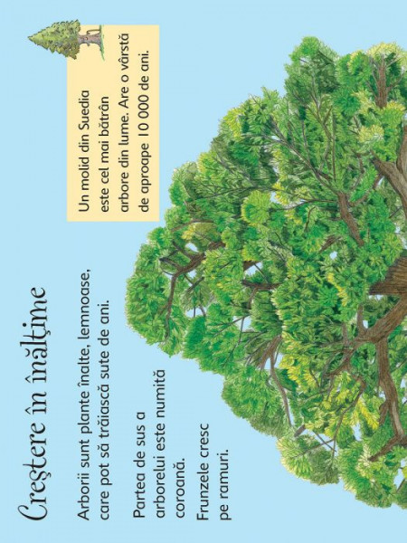 Arborii, usborne