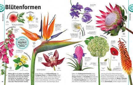 Carte in limba germana despre plante, Pflanzen, dk, 8+