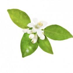 dōTERRA Touch Neroli, pentru buna dispozitie, pete, calmarea pielii, masaj relaxant