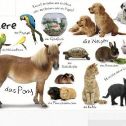 Carte in limba germana, primele cuvinte, Erstes Lernen : Wörter, DK, 12+