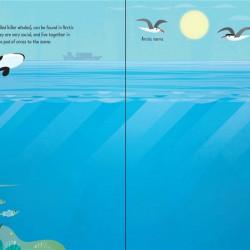 First Sticker Book Narwhals, Usborne