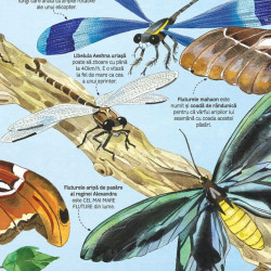Marea carte a fluturilor si a altor insecte (Usborne)