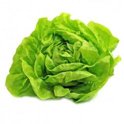Salata verde - pret/buc