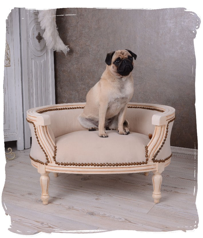 Divc51 - Divan  Canapea  Sofa  Bancheta - Animale De Companie - Auriu