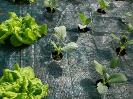 Agrotekstil podloga za zaštitu zemljišta 1,05m x 100m (100gr)