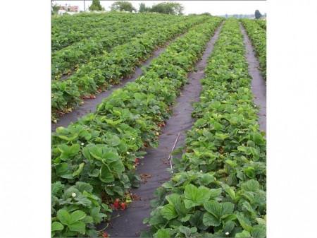 Agrotekstil podloga za zaštitu zemljišta 2,1mx50m (100gr)