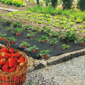 Folija za jagode SIVO CRNA 1,2mx1000m 30mic - rupe 30x30