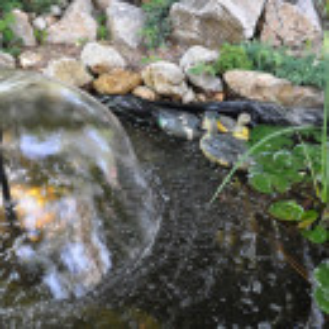 Folija za ribnjake i jezera 4m - ALFAFOL 0,5mm
