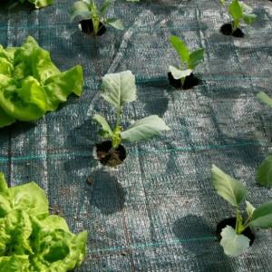Agrotekstil podloga za zaštitu zemljišta 4,2mx100m (100gr)