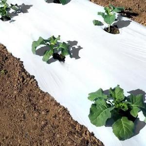 Folija za jagode BELO CRNA 1,2mx1000m 30mic - rupe 30x30 dvoredna