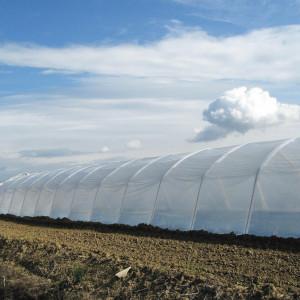 Folija za plastenike 200mic Patilux ( širine 8m, 8,5m, 10m, 12m, 14m)
