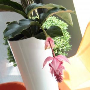 Saksije za cveće TUBUS SLIM SHINE 30x57cm antracit sa uloškom