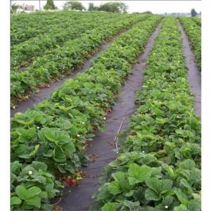 Agrotekstil podloga za zaštitu zemljišta 5,25mx100m (100gr)