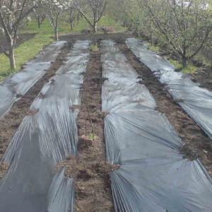 Malč folija crna Dalin 0,8m x 1500m 12mic