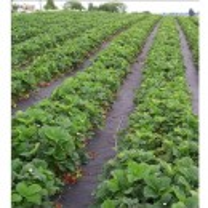 Agrotekstil podloga za zaštitu zemljišta 1,05m x 50m (100gr)