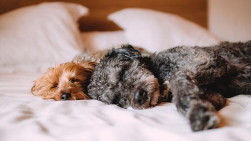 E bine sau nu sa dormi cu animalul de companie in pat?