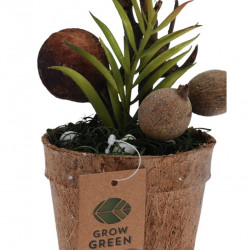 Planta decorativa in ghiveci Plant