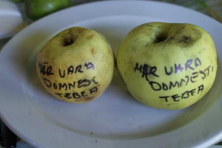 Poze Măr de vară domnesc Țebea