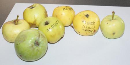 Poze Măr Dulce de Deuș
