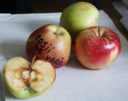 Poze Măr roșii de vară