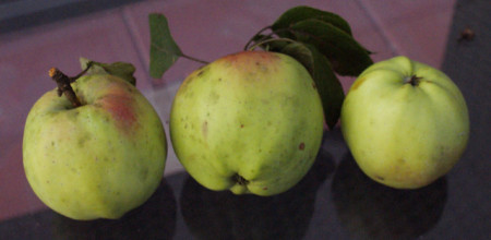 Poze Măr Belle Fleur Kitaika