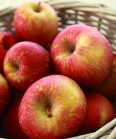 Poze Măr Domnesc
