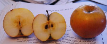 Poze Măr Rotilate de Țebea