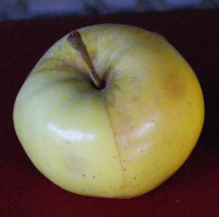 Poze Măr Dulce