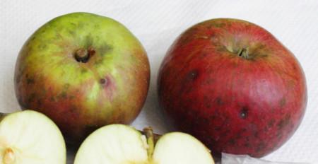 Poze Măr roșii de Țebea
