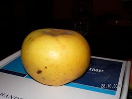 Poze Măr Poinic