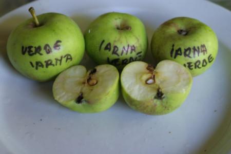 Poze Măr verde de iarnă Țebea