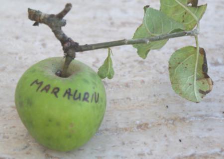Poze Măr Auriu de Rengheț