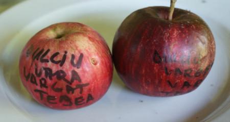 Poze Măr dulciu vărgat de Țebea