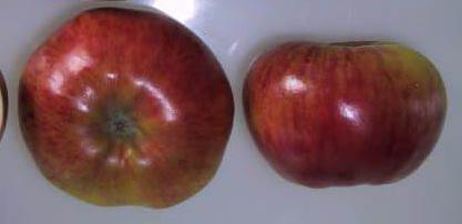 Poze Măr Kolacara