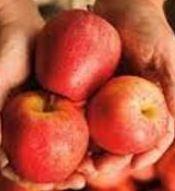 Poze Măr de Sf. Petru