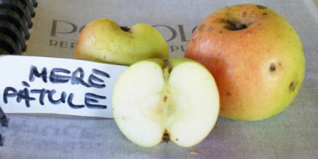 Poze Măr Pătul de Vața