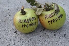 Poze Măr Ribston Pepping