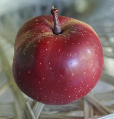 Poze Măr cu miez roșu Baya Marisa