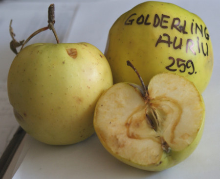 Poze Măr Gulderling Auriu