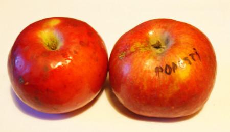 Poze Măr Popești