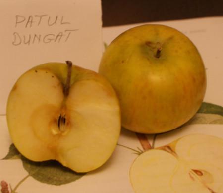 Poze Măr Pătul dungat